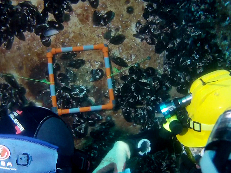 OCEANIC Project Press Release